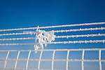 Heavy hoarfrost covering a fence with a branch hanging from the wires on a blue sky day