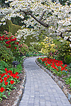 Spring flowers garden path in Butchart Gardens on Vancouver Island; British Columbia; Canada. Butchart in April features flowering trees; tulips; narcissus; and other bulbs.