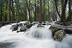 Bridalveil Creek in Yosemite National Park, CA overflowing with snow melt-off. The banks are overrun and water reaches the visitor parking lot. Spring of 2006