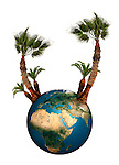 The Earth globe with palm trees growing from it isolated on white background