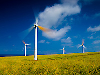 Active windmills in an open field in Hawi on the Big Island.