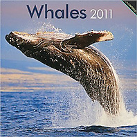 BrownTrout Whales 2011 Calendar, cover use, USA, Image ID: Humpback-Whale-