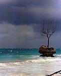 Erosion - Tree in the sea during storm, Atlantic coast of Barbados. February 1975