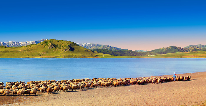 Shepherds & their sheep on the shotre of Lake Van, Turkey 5