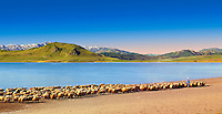 Shepherds & their sheep on the shotre of Lake Van, Turkey 5