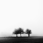 3 trees appear through thick fog