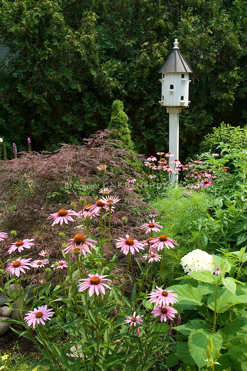 Bird house in garden of Echinaceas | Plant & Flower Stock ...