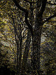 Trees in photoshop