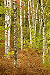 Fall Forests