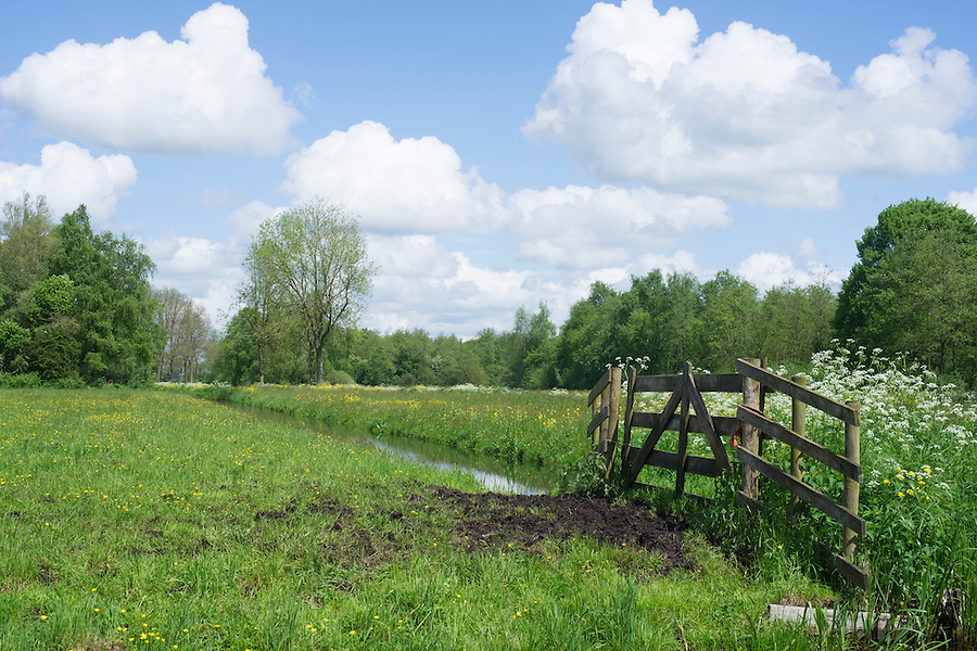 a meadow in the ecological way