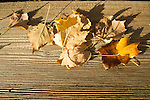 Fall colorful leaves and wood deck texture Autumn