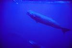 Delphine Legay & Sperm Whales