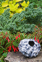 Vegetable kale Winterbor Brassica, Coleus Solenostemon Pineapple Queen, Begonia Romance, ornamental pot