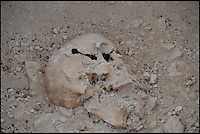 BNPS.co.uk (01202 558833) <br /> Pic: BournemouthUniversity/BNPS<br /> <br /> A Roman skull of one of the remains found at the Winterbourne Kingston dig. <br /> <br /> <br /> A group of first year university students have made one of the most significant archeological finds of recent times after discovering the 1,700-year-old remains of a wealthy Roman family.<br /> <br /> The budding archaeologists discovered a grave containing five super-rich Romans in a farmer's field in rural Dorset just metres from where a 4th century villa was found.<br /> <br /> Although more than 700 Roman villas have been found in Britain, it is the first time ever the people who lived in them have been uncovered.<br /> <br /> Experts have described the find as &quot;hugely significant&quot; - and say it could provide vital clues to who was living in Britain around 350 AD.<br /> <br /> Around 85 students, mostly aged in their late teens and early 20s, made the landmark discovery after carrying out a study on a corn field near Winterbourne Kingston near Blandford in Dorset.