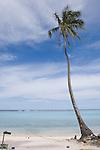 Temae Beach, Moorea, French Polynesia; a single palm tree near the water's edge at Temae Beach , Copyright © Matthew Meier, matthewmeierphoto.com All Rights Reserved