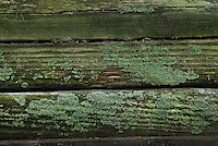Mold and algae cover the edges of some of the planks removed from fishing docks. Workers repair boat and fishing docks for Hoover Reservoir in Columbus,  Some of the board replaced were more than 30 years old.Ohio.