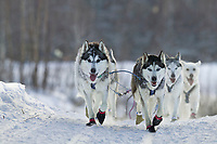 Siberian Huskies, (13 year old) Megan Hedgecoke's dog team trots over a ridge on the 2004 Junior Yukon Quest 120 mile sled dog race from Fairbanks to Twin Bears back to Fairbanks. Megan finished 12th in the race.