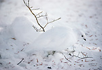 A White-tailed Ptarmigan is easily camouflaged in the surrounding snow, Washington.