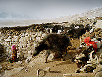 Two young girl hiding from a scary yak. Leaving early monring to herd the yaks for the day..Campment of Sary Tash..Winter expedition through the Wakhan Corridor and into the Afghan Pamir mountains, to document the life of the Afghan Kyrgyz tribe. January/February 2008. Afghanistan