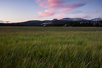 Green summer grasses of Tuolumne meadows at sunset, Yosemite national park, California, USA