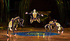 Amaluna from Cirque du Soleil at The Royal Albert Hall, London, <br /> Great Britain <br /> performance <br /> 15th January 2016 <br /> <br /> Hoop Diving <br /> <br /> <br /> <br /> Photograph by Elliott Franks <br /> Image licensed to Elliott Franks Photography Services