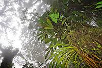 Amérique Centrale, Costa Rica