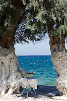 View between a pair of trees with whitewashed trunks over a choppy sea towards the distant coastline