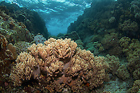 A reef in the surge at Apo Island. SOme of these reefs are now completely gone because of the storms in 2011 and 2012.