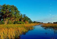 Reed beds  in the Okavango Delta in Botswana, Africa