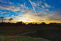 A jet's contrail slices through sunrise-painted clouds, and a footpath cuts through the verdant vegetation, inviting a hike, at Bean Hollow State Beach south of San Francisco.