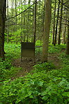 Wild Boar Trap, Great Smoky Mountains National Park, TN, USA