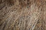 John Letts, Heritage grains<br /> <br /> John grew around 1000 varieties including 400 types of genuine Spelt wheat