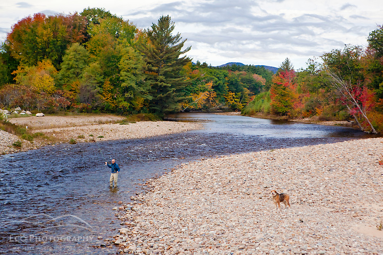 Man fly fishing new hampshire white mountains swift for Swift river fly fishing