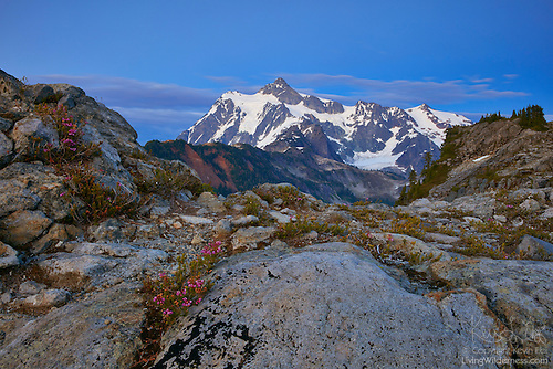Mount Shuksan and Pink Mountain Heather, Artist Point, North Cascades