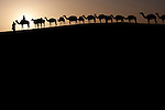 A camel train transporting salt across the Sahara, Mali
