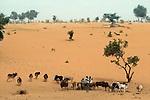00385_09, The Sahel, Niger, Africa, 1986, NIGER-10028