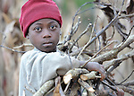 A boy carries firewood in the mountainous community of Foret-des-Pins, Haiti. Deforestation has plagued Haiti for decades, and the majority poor continue to use wood and charcoal as their main energy source.