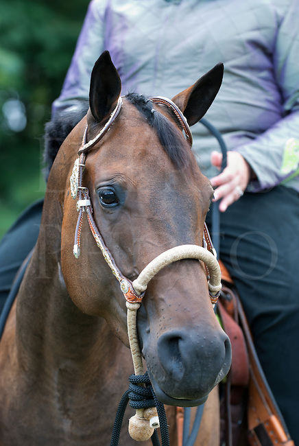 Horse Wearing a Bosal Bit Less