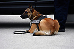 Police K-9 dog and officer ready to work