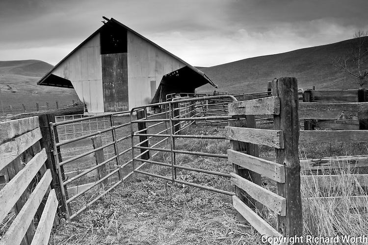 Wood and metal gates and guides leading to a cattle barn near Livermore, California.