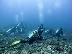 Hordes of divers from many Malapascua Island dive shops rest on the reef at Monad Shoal, waiting and hoping for a thresher shark to visit from the deep.  (At Monad Shoal, Central Visayas, the Philippines.)