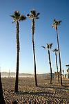 Palm trees in the sand near the pier in Venice Beach, California