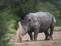 Khama Rhino Sanctuary