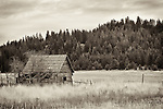 A small decaying structure sits near a dead tree in a field within Northern Idaho.