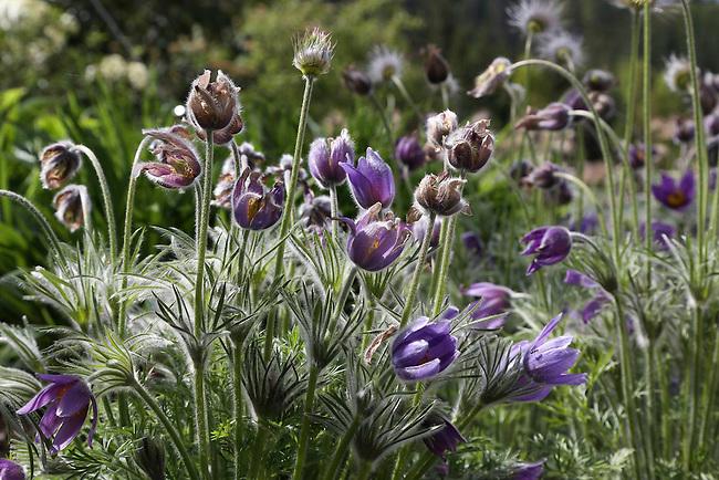 Natural Garden 827