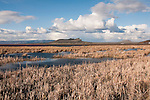 Tule Lake refuge wetlands in Northern California.  Photo copyright Lee Foster california117682.