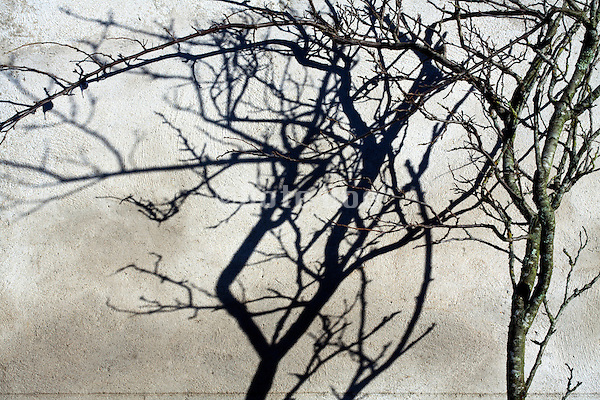 tree twigs and strong shadow projected on a wall