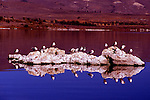 Gulls atop tuffa in evening at Mono Lake, CA.