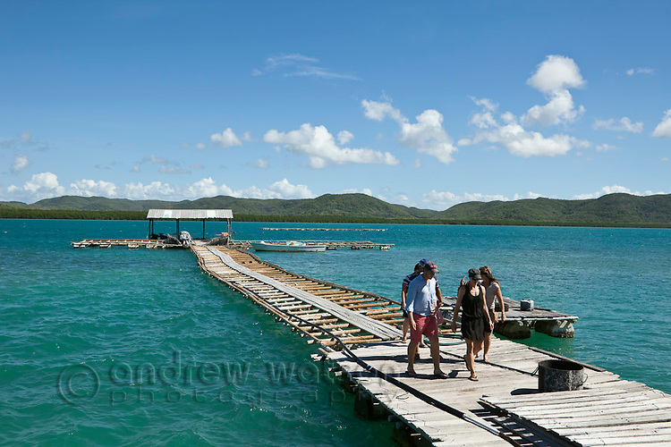 Tourists on the jetty at Kazu Pearls.  The pearl farm is one of the last in the Torres Strait, growing and harvesting cultured pearls.  Friday Island, Torres Strait Islands, Queensland, Australia