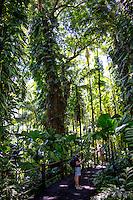 Visitors on a pathway, one taking photos using a tripod, amidst tropical foliage at Hawai'i Tropical Botanical Garden, Big Island of Hawaiʻi.